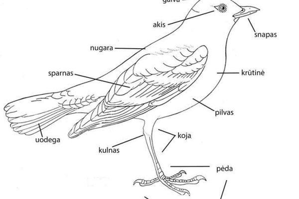 Paukščių anatomija