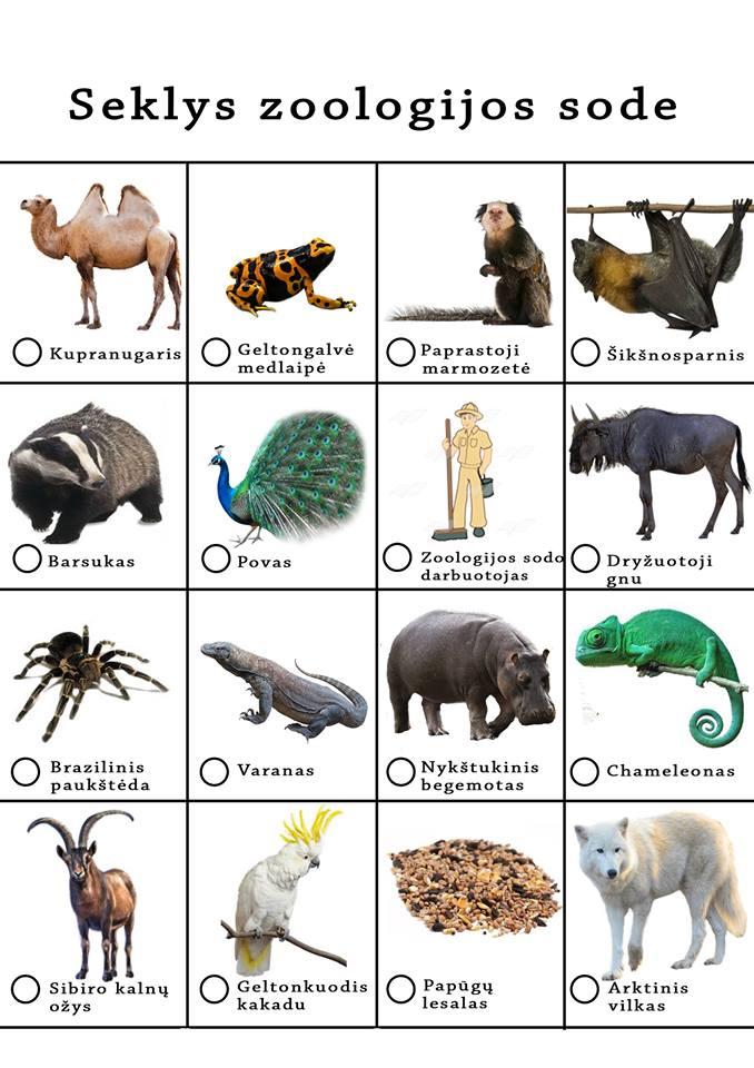 seklys zoologijos sode