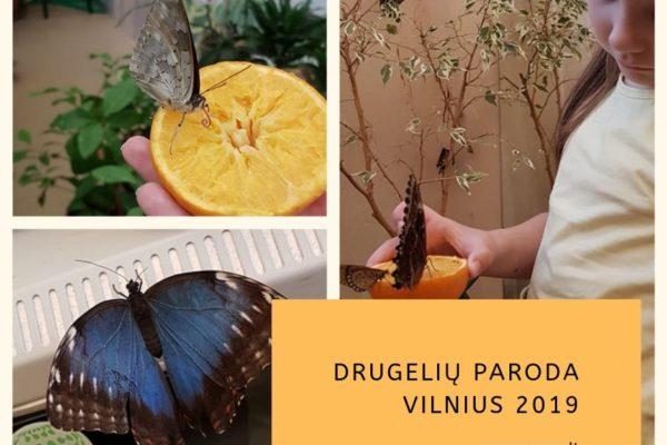 Vilnius. Drugelių paroda 2019